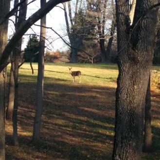 one-deer